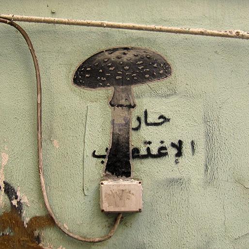 Fungiculture