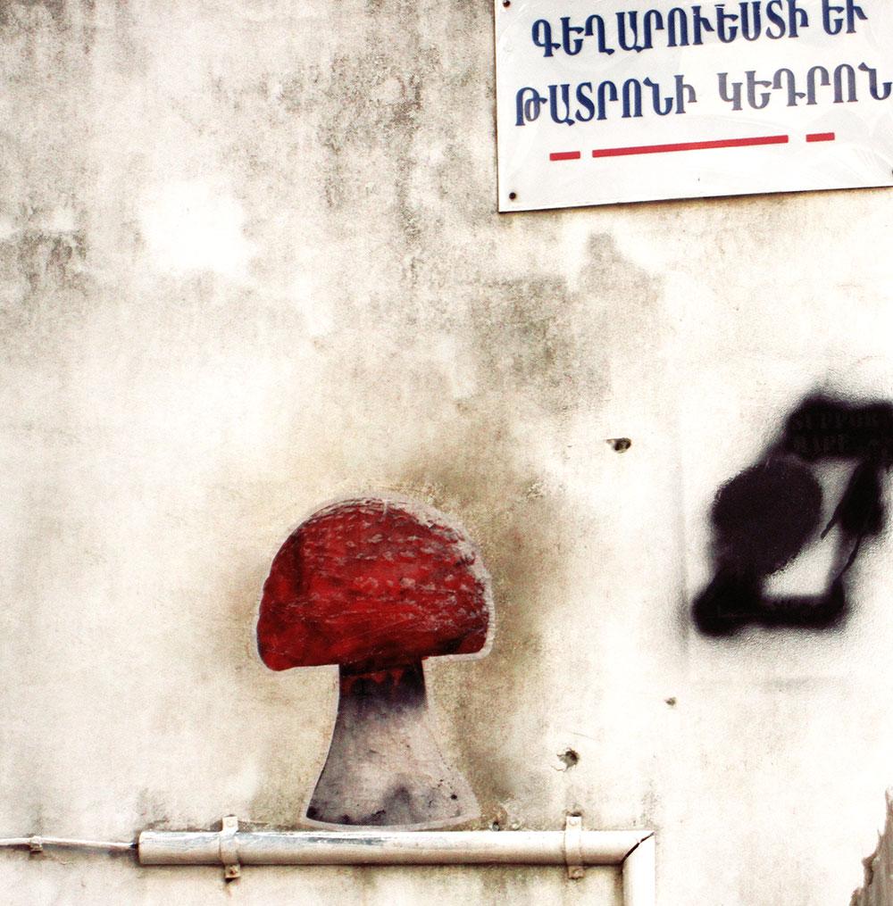 fungiculture10